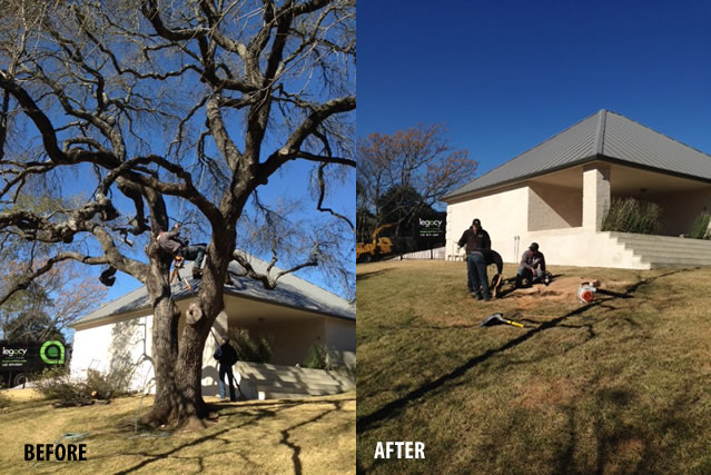 before-after-austin-tree-removal-service